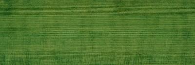 Myrtle green 112